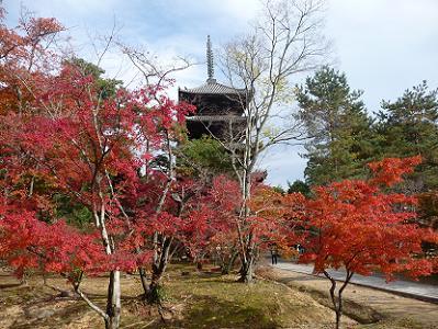 五重塔と真っ赤なモミジ