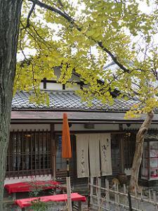 湯豆腐屋とイチョウ