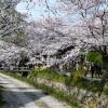 京都の桜散策コース-南禅寺、哲学の道、真如堂、金戒光明寺編