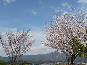 船岡山からの眺め