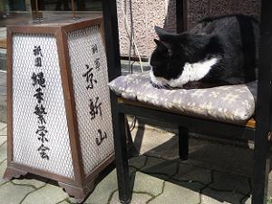 料亭京新山の前で寝るネコ