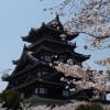京都の桜散策コース-伏見桃山城、御香宮神社、長建寺編
