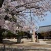 京都の桜散策コース-妙覚寺、本法寺、妙顕寺編