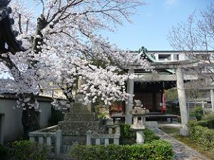 文子天満宮の桜