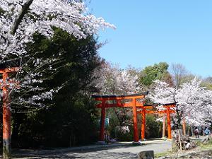 竹稲荷社の参道