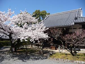元三大師堂と満開の桜