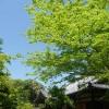 新緑と青空