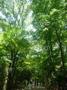 緑色に包まれた参道