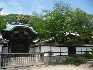 唐門と桜の青葉
