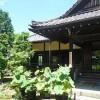 夏の勝林寺・2015年
