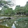 夏の終わりの建仁寺と団栗橋のサルスベリ