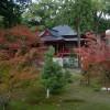 大覚寺で観賞した紅葉と嵯峨菊展