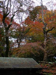 山門の屋根と紅葉