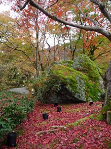 巨岩と散り紅葉
