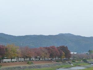 賀茂川の紅葉