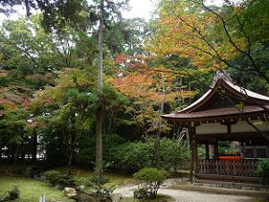 賀茂山口神社と紅葉