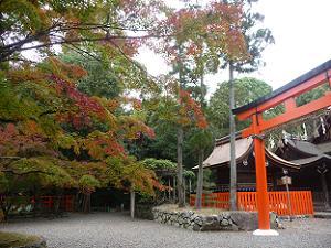 奈良社の鳥居と紅葉