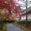 二尊院の紅葉の馬場と勅使門付近の真っ赤なモミジ
