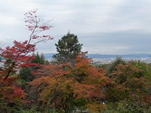 小倉山から見下ろす紅葉風景