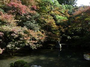 縁側で見る庭園の紅葉