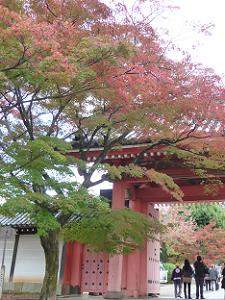赤門前の紅葉