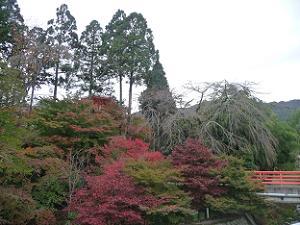 極楽橋と紅葉