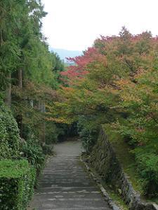 石段上から見下ろす参道