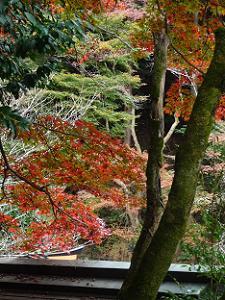 手水屋の屋根と紅葉