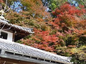 不動堂の屋根と紅葉