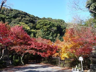 男山を背後に眺める紅葉