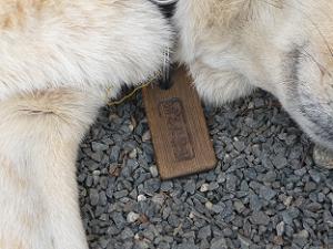 イヌの首輪