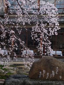 かにかくに碑と枝垂れ桜