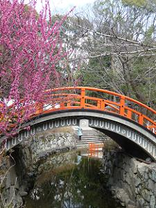 反り橋と光琳の梅