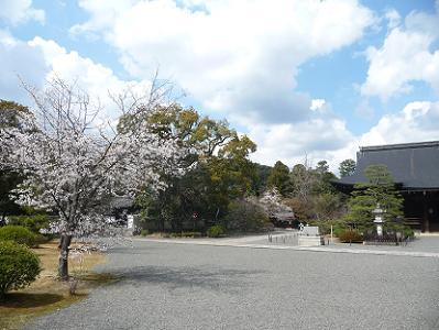 満開の桜と本堂