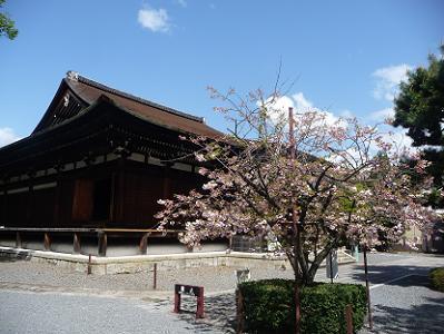 咲き始めの普賢象と釈迦堂
