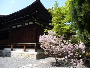 八重桜と釈迦堂