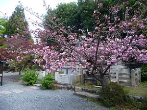 阿亀像付近の関山
