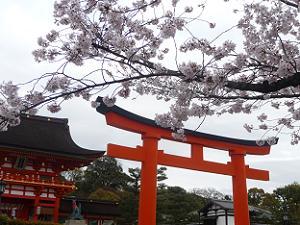 桜と鳥居と楼門