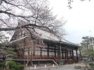 本堂と咲き始めの桜
