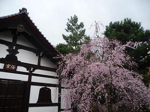 浴室と枝垂れ桜