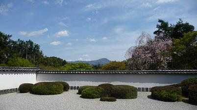 サツキの刈込と枝垂れ桜と比叡山