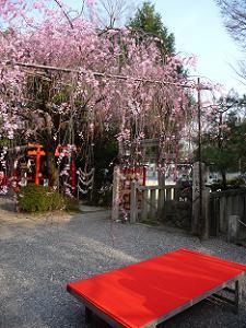 床几台と枝垂れ桜