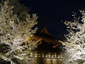 桜に挟まれた金堂