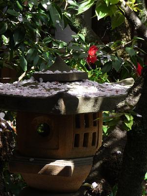 灯籠に散る桜