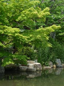 池のほとりの新緑