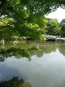 新緑越しに見る池