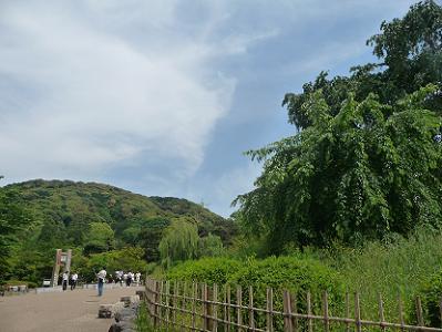 祇園枝垂れ桜と青空