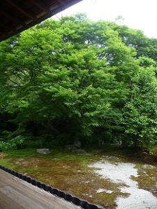 方丈の北東の庭