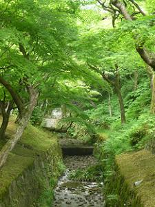小川と新緑