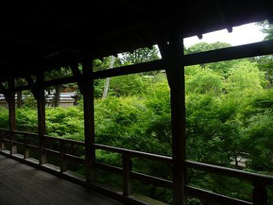 臥雲橋から見る新緑